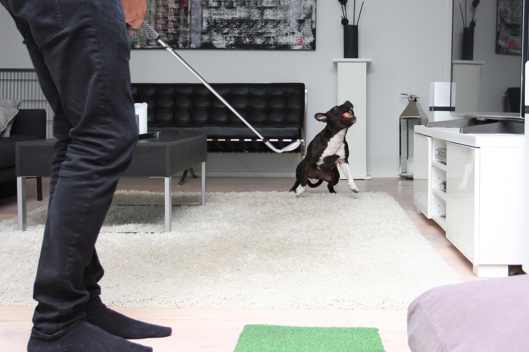 Chippejä koiralle pehmopalloilla, hyvä kohdeharjoite ja koiralle hyvä keskittymistreeni